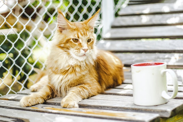 Cat relaxing with a cup of java