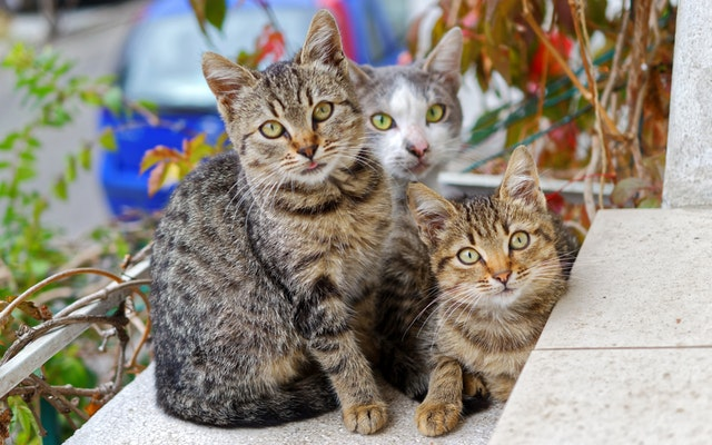 pictures of cats for cat adoption in Calgary article