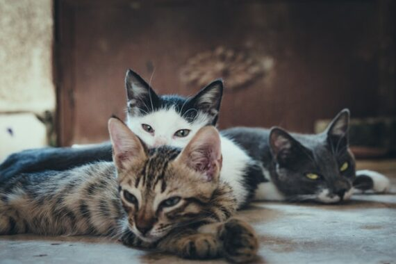 picture of multiple cats to show that article is about cat adoption in toronto