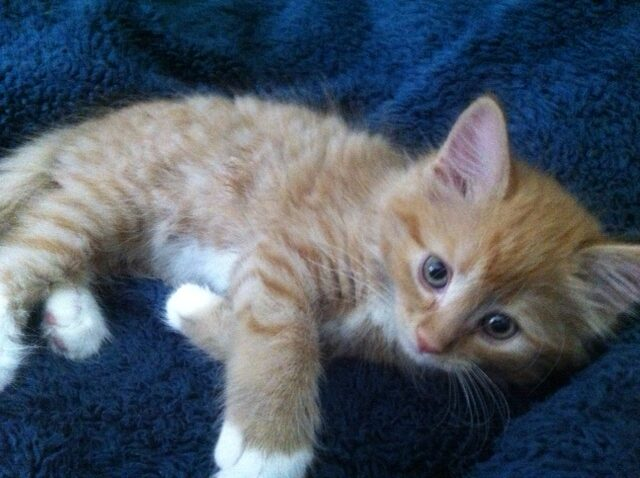 My Tabby Cat Milo when he was a little kitten