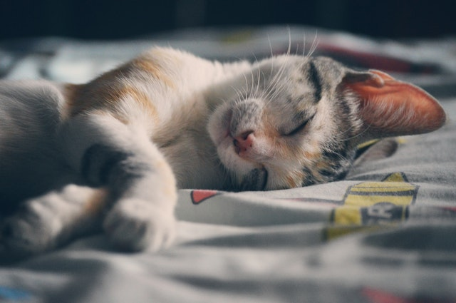 A cat sleeping on a sheet to denote, how can I deal with my cat allergy.