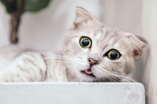A picture to denote a cat reacting to hearing his dry cat food being opened!