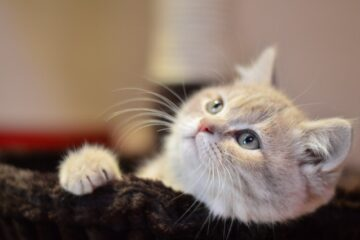 a cute cat to denote looking for their owner to purchase cat trees in St. John's