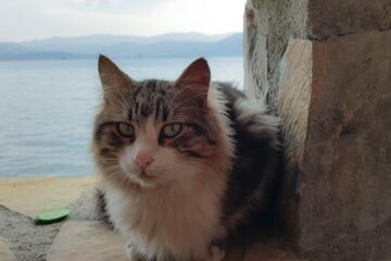 A cat by the lake to denote a cat in kelowna needing to find cat trees in Kelowna.