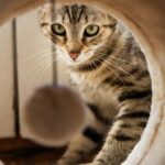 Cat playing in cat tunnel to show the benefits of getting cat trees in Windsor for your cat.