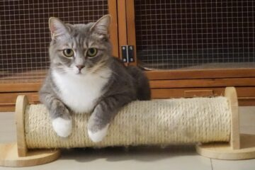 A picture of cat of scratcher, to denote that needs to look for cat trees in thunder bay