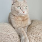Picture of cat on cat bed to denote cat looking for cat trees in brampton ontario