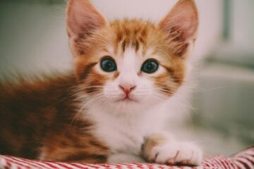 A cute kitten to denote a cat looking for cat trees in Quebec City
