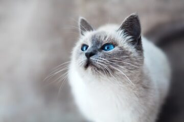A picture of a cat to denote a cat wondering if there are cat trees at Walmart.