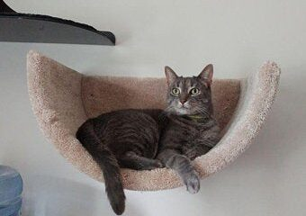 A picture of a cat on a wall mounted cat bed from etsy cat beds.