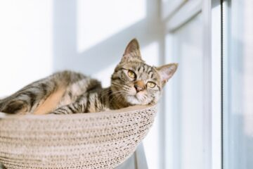 A picture of a cat in a basket to denote how much it loves modern cat trees!