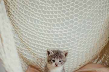 A little kitty in a hammock to denote the importance of having cat trees with hammocks.