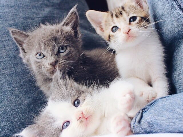A picture of cats to denote cats looking for cat trees in Sudbury Ontario.