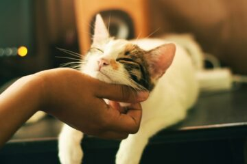 A picture of a person showing affection to a cat to show that they are a cat lover who would appreciate some cat gifts from Amazon.